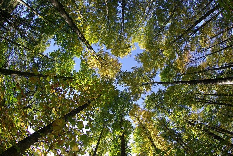 Conférence interactive à 360 ° à travers les arbres |